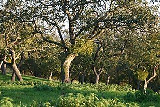 Orchardwithmtoe